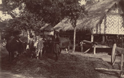 A village scene in Upper Burmah, shewing oxen treading out the corn